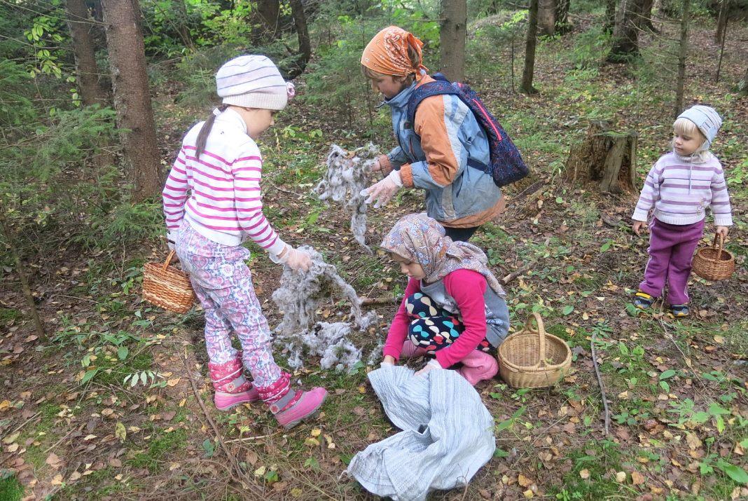 Убираем мусор в лесу